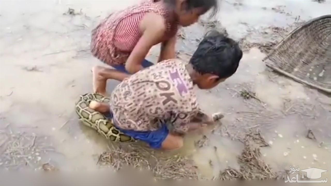 (فیلم) تلاش دو کودک خردسال برای گرفتن مار