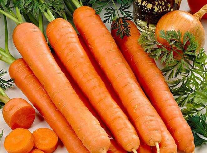 هویج (نگهداری + پرورش)