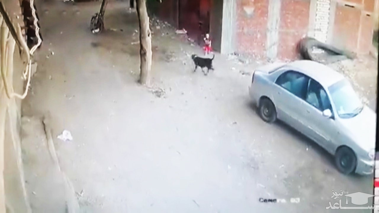 (فیلم) نجات کودک از دندانهای سگ ولگرد توسط گربه!