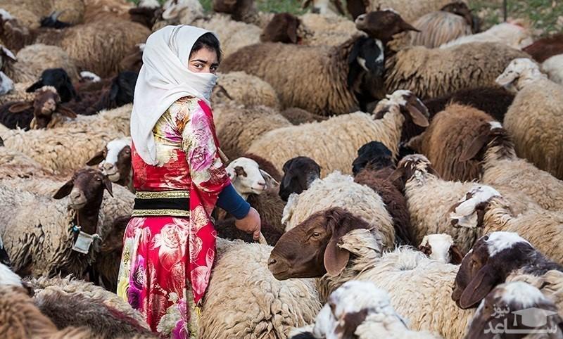 عبور عشایر ترکاشوند، آتش سوزی بازار تاریخی تبریز و...