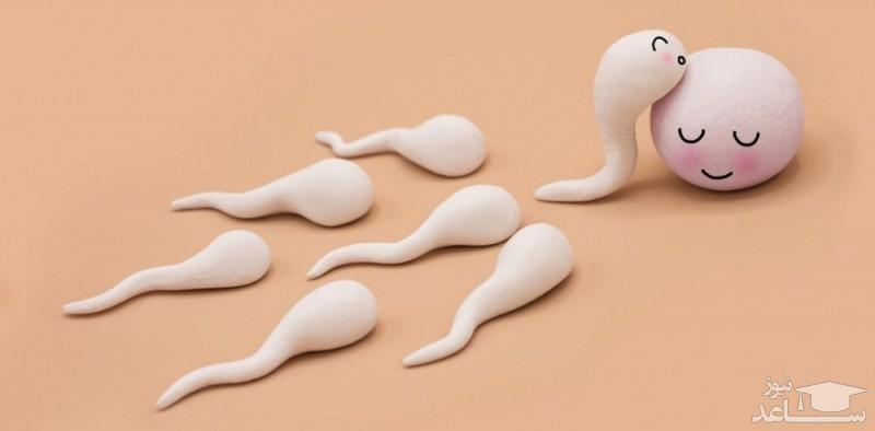 تقویت اسپرم مردان با روش های خانگی