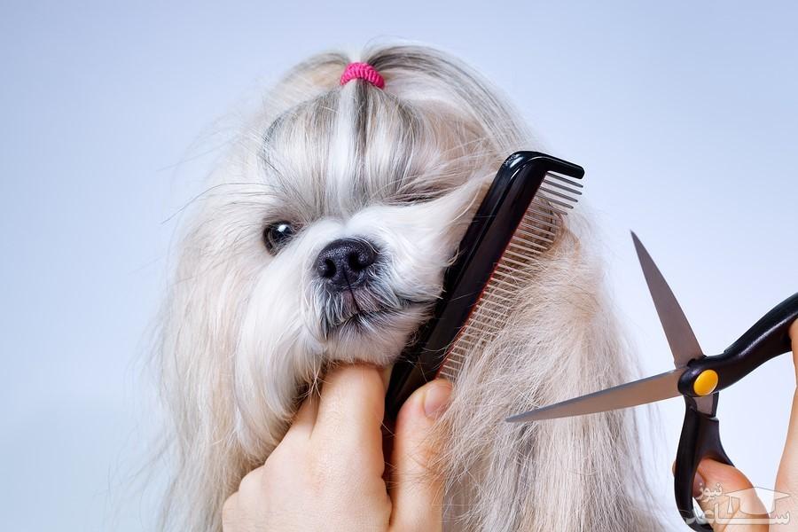 نکاتی درباره کوتاه کردن موی سگ در تابستان