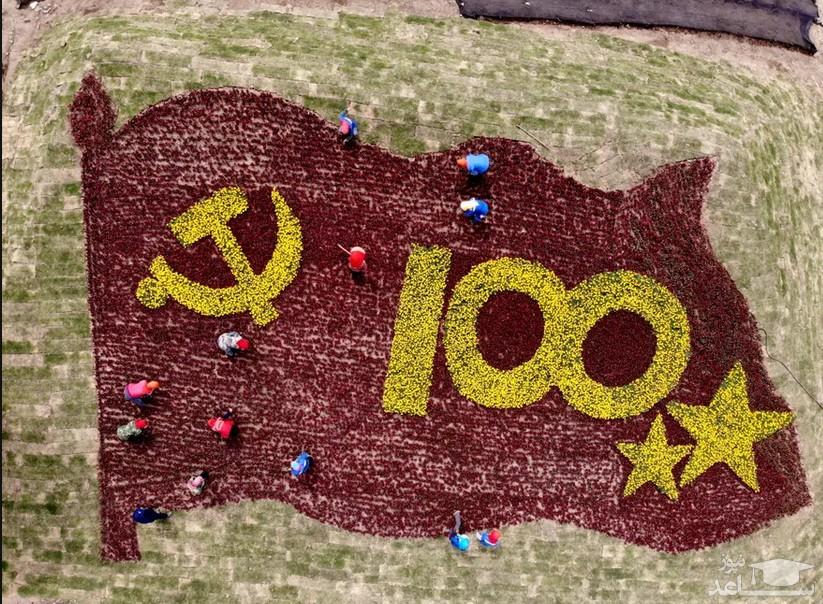 درست کردن گُلفرش به مناسبت صدمین سالگرد تاسیس حزب کمونیست چین در یک مرزعه زراعی در استان جیانگسو چین