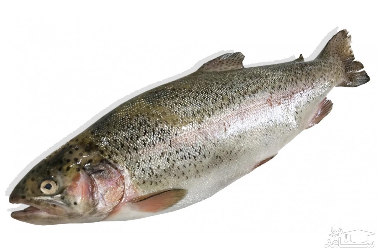 (عکس) بیرون کشیدن ماهی از گلوی ماهیگیر!