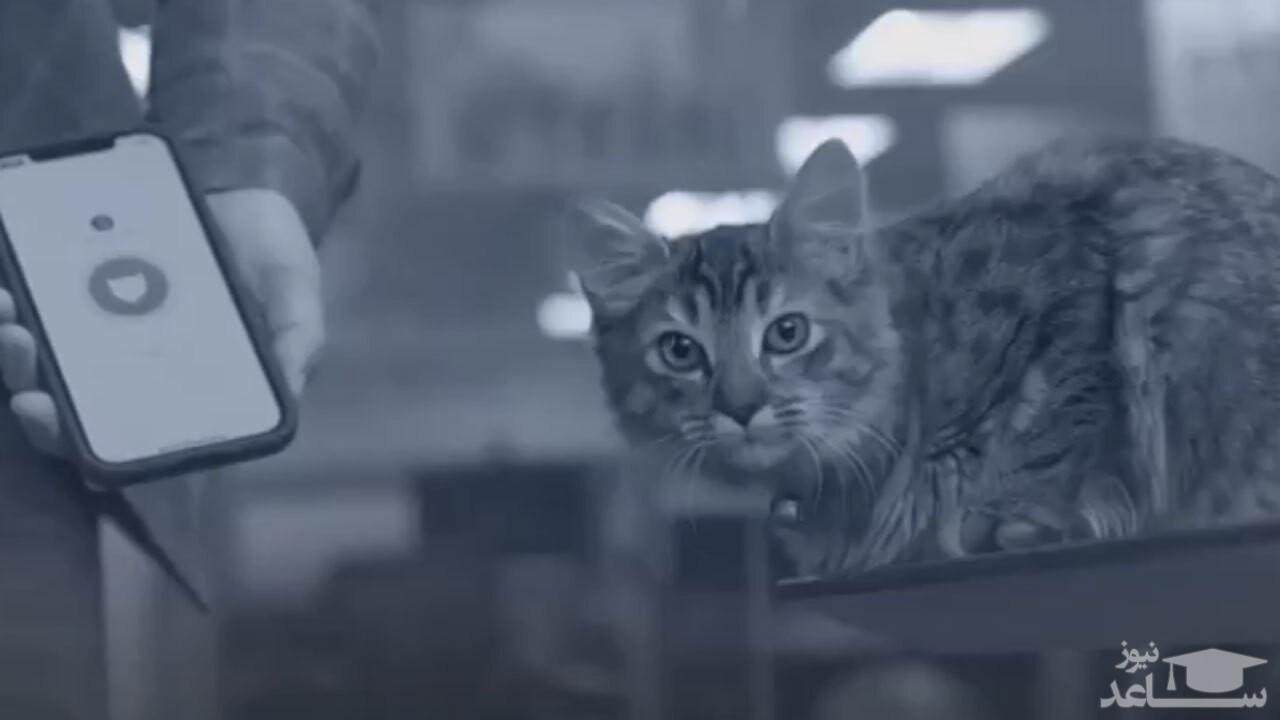 (فیلم) وقتی تکنولوژی زبان گربهها را باز میکند!