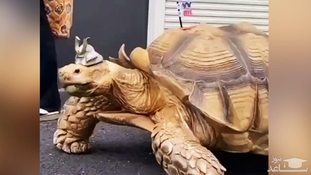 (فیلم) رفاقت ۲۵ ساله یک مرد با لاکپشت