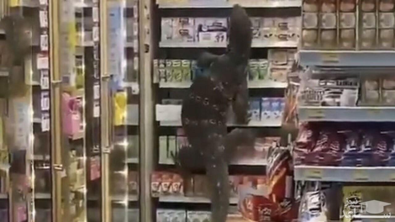 (فیلم) حمله مارمولک عظیم الجثه به یک فروشگاه