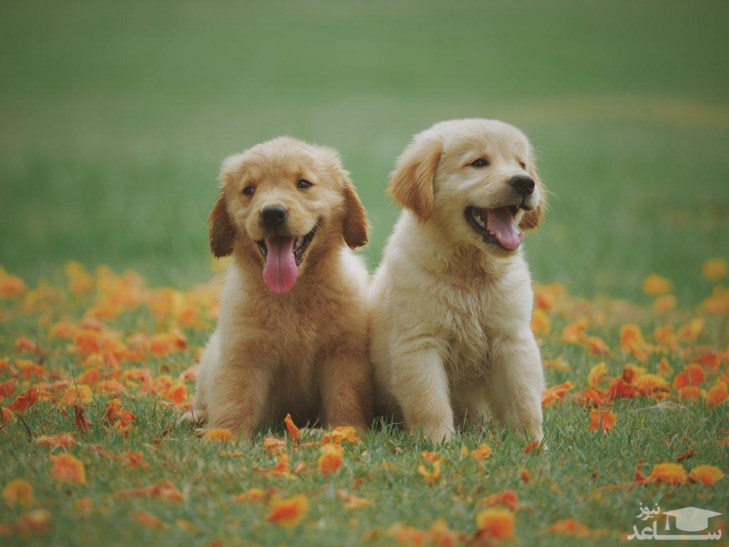 سگهایی که شغل رسمی دارند!