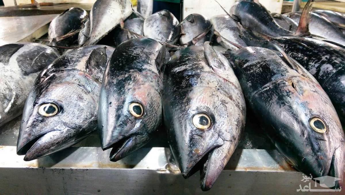 ماهی شب عید را چند بخریم؟