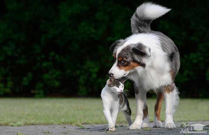 رابطه سگ و گربه