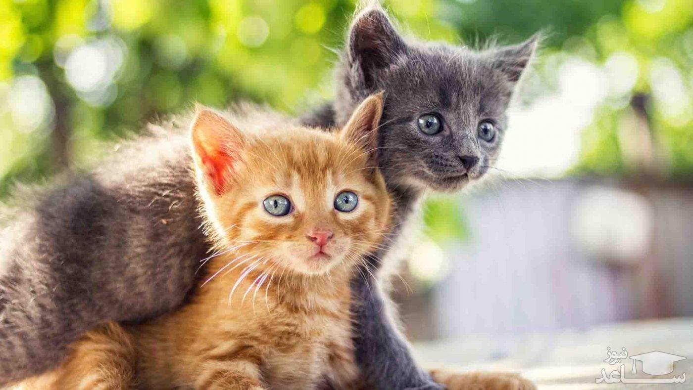 عکس بامزه از خانه گربه ها