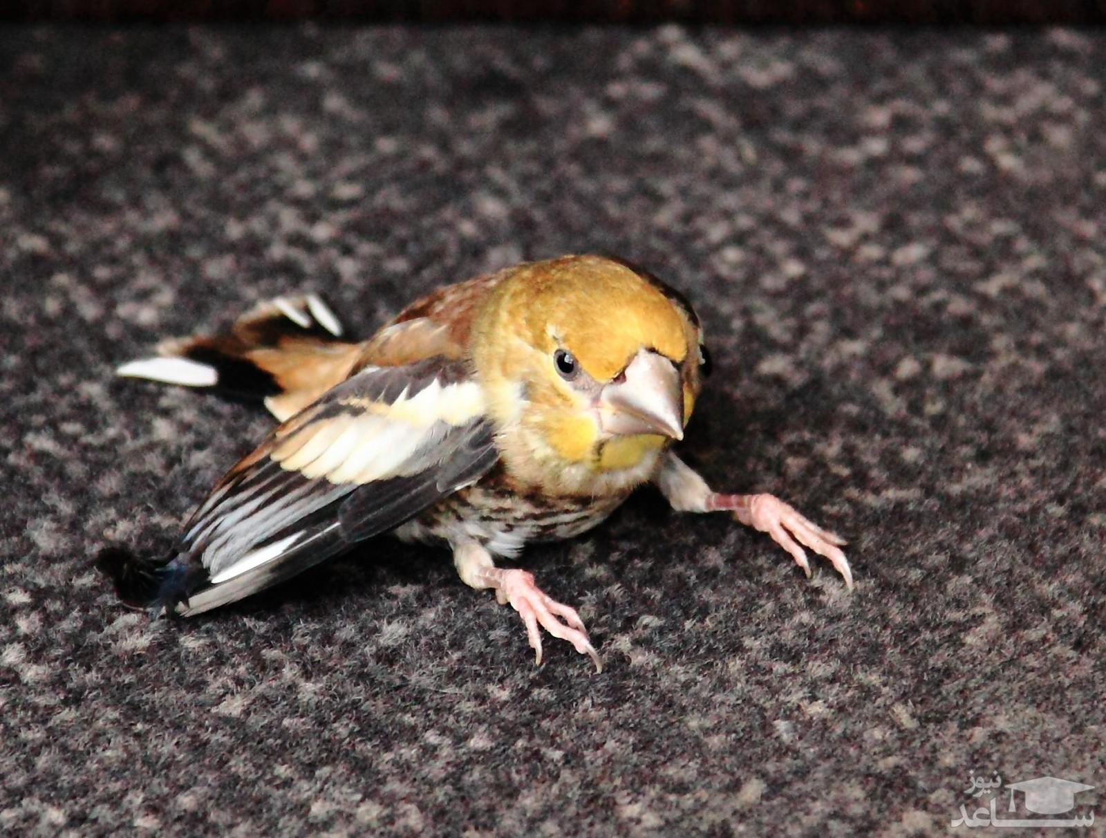 نشانه های مریض بودن پرنده