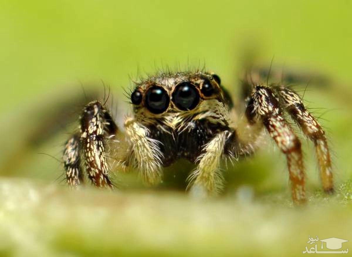 حقایق بسیار جالب درباره چشمان عنکبوت