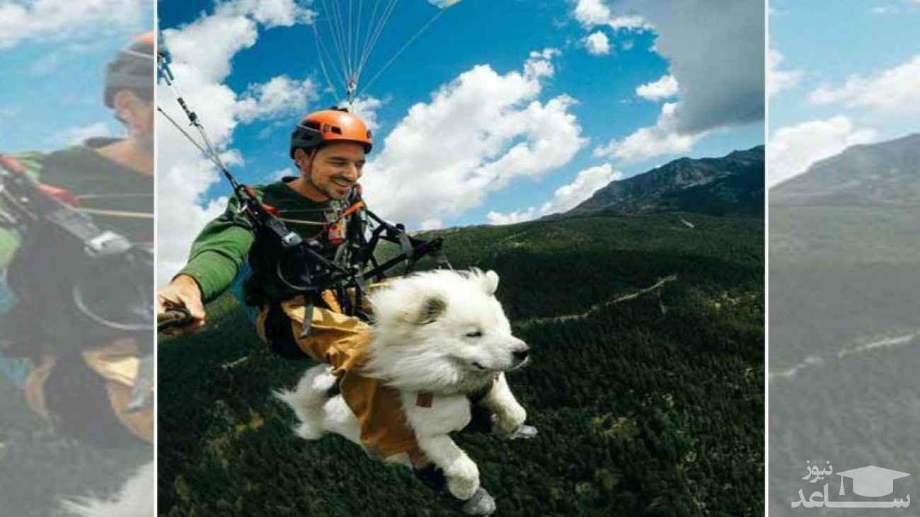 ویدئوی جالب پرواز سگ با پاراگلایدر