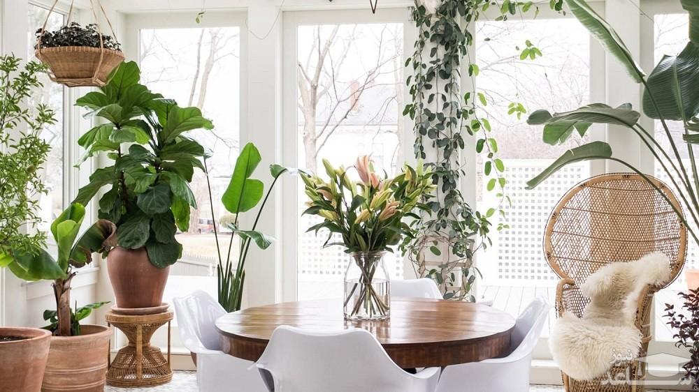 آشنایی با بهترین گل های آپارتمانی برای فصل زمستان