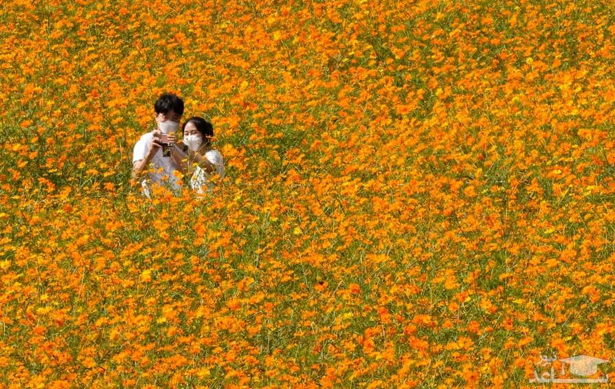 """سلفی گرفتن یک زوج در """"المپیک پارک"""" شهر سئول کره جنوبی/ آسوشیتدپرس"""