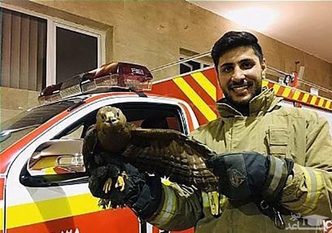 وحشت خانواده تهرانی از عقاب در حیاط خانه شان/  بلوار ارتش