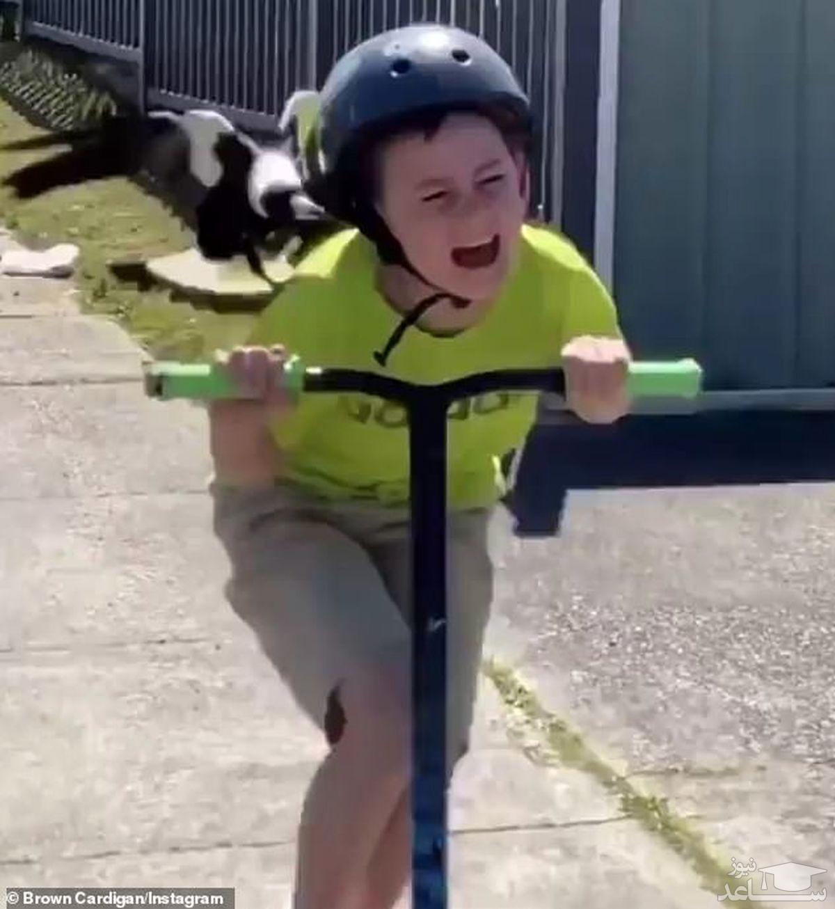 (فیلم) حمله زاغ خشمگین به پسر بچه اسکوترسوار