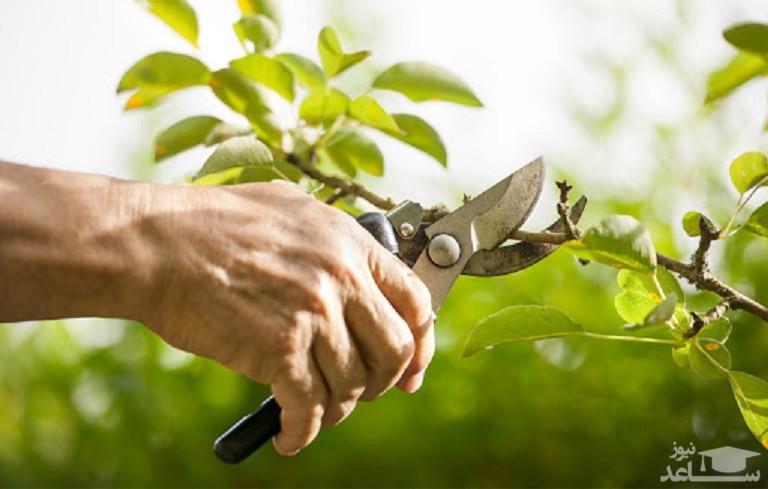 زمان و نحوه هرس کردن گیاهان خانگی