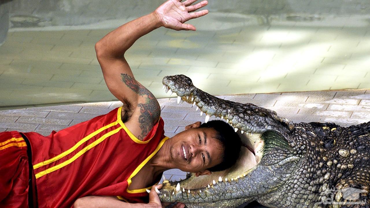 (فیلم) عاقبت اجرای نمایش با حیوانات وحشی