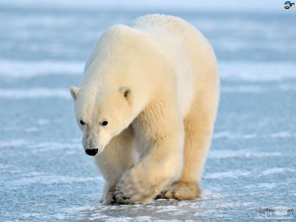 (عکس) تلاش خرس کنجکاو برای سوار شدن بر روی قایق