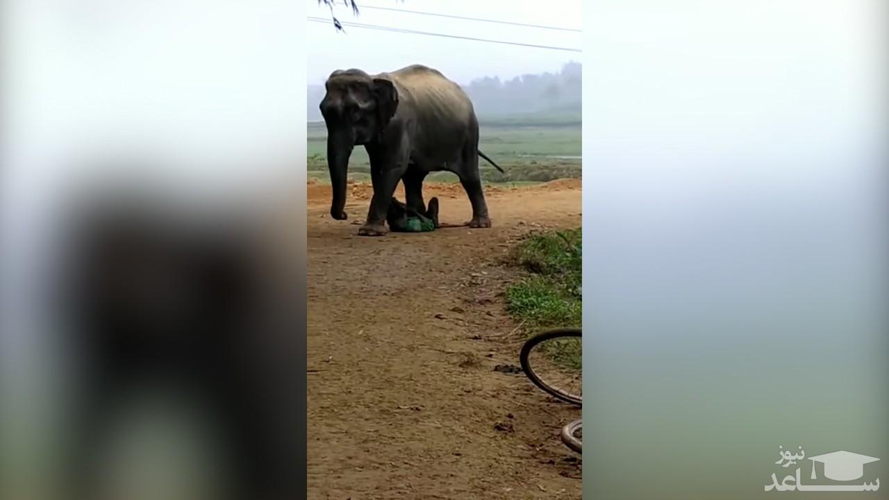 (فیلم) افتادن یک مرد هندی زیر دست و پای فیل عصبانی