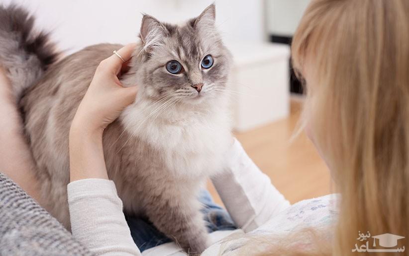 علل و علائم قارچ پوستی یا بیماری درماتوفیت در گربه