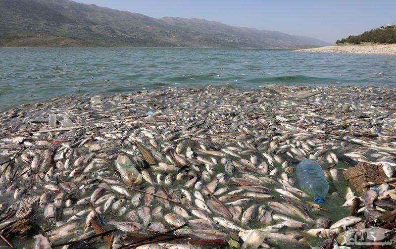 مرگ دهها هزار ماهی در لبنان