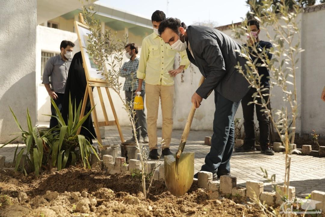 پویش ملی «درختیاری» زمینه ای برای فعالیت جهادی دانشجویان بسیجی