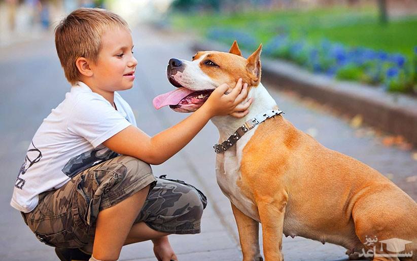 نحوه مدیریت و تنظیم کردن رابطه سگ و کودک