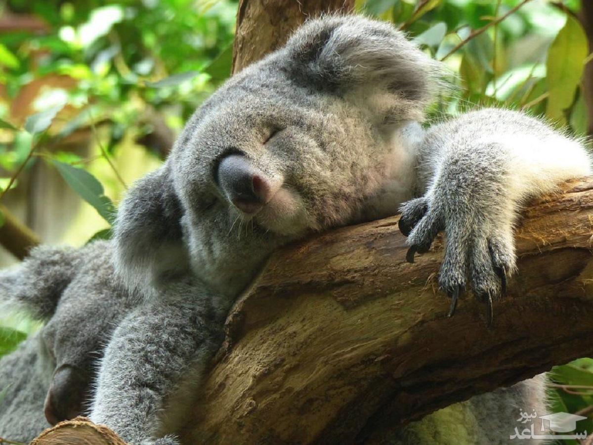 (فیلم) خستهترین حیوان دنیا