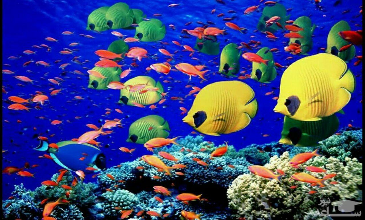 (عکس) گونه ای زیبا از ماهی اقیانوسی در سواحل آمریکا