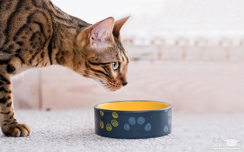 انواع مشکلات گوارشی در گربه ها و روش های درمان