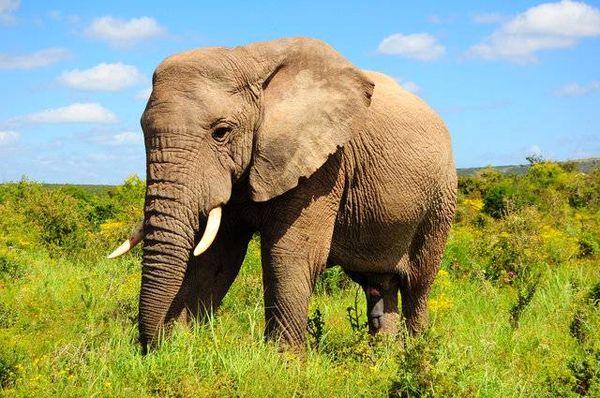 موی انسان میتواند وزن 2 فیل را تحمل کند!