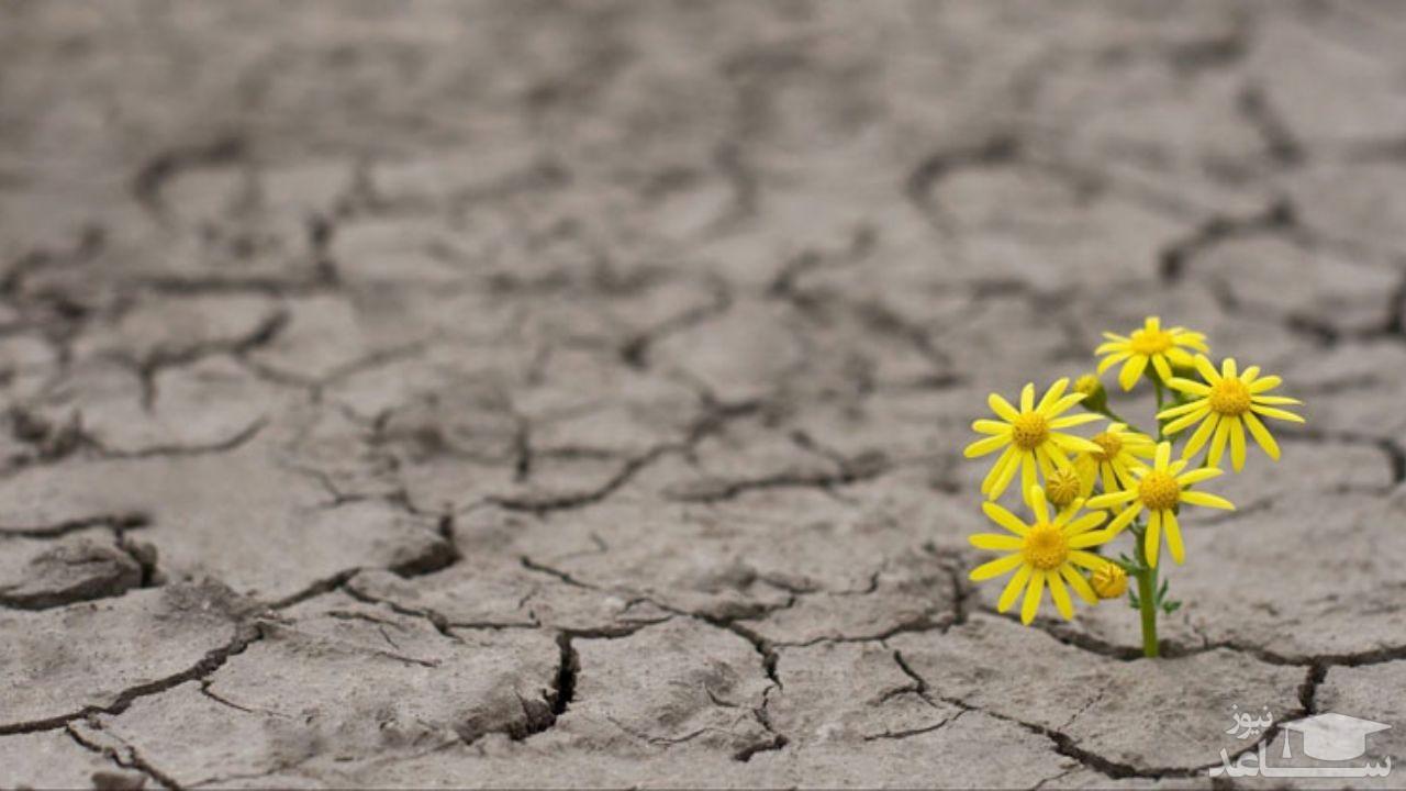 تست روانشناسی امید به زندگی