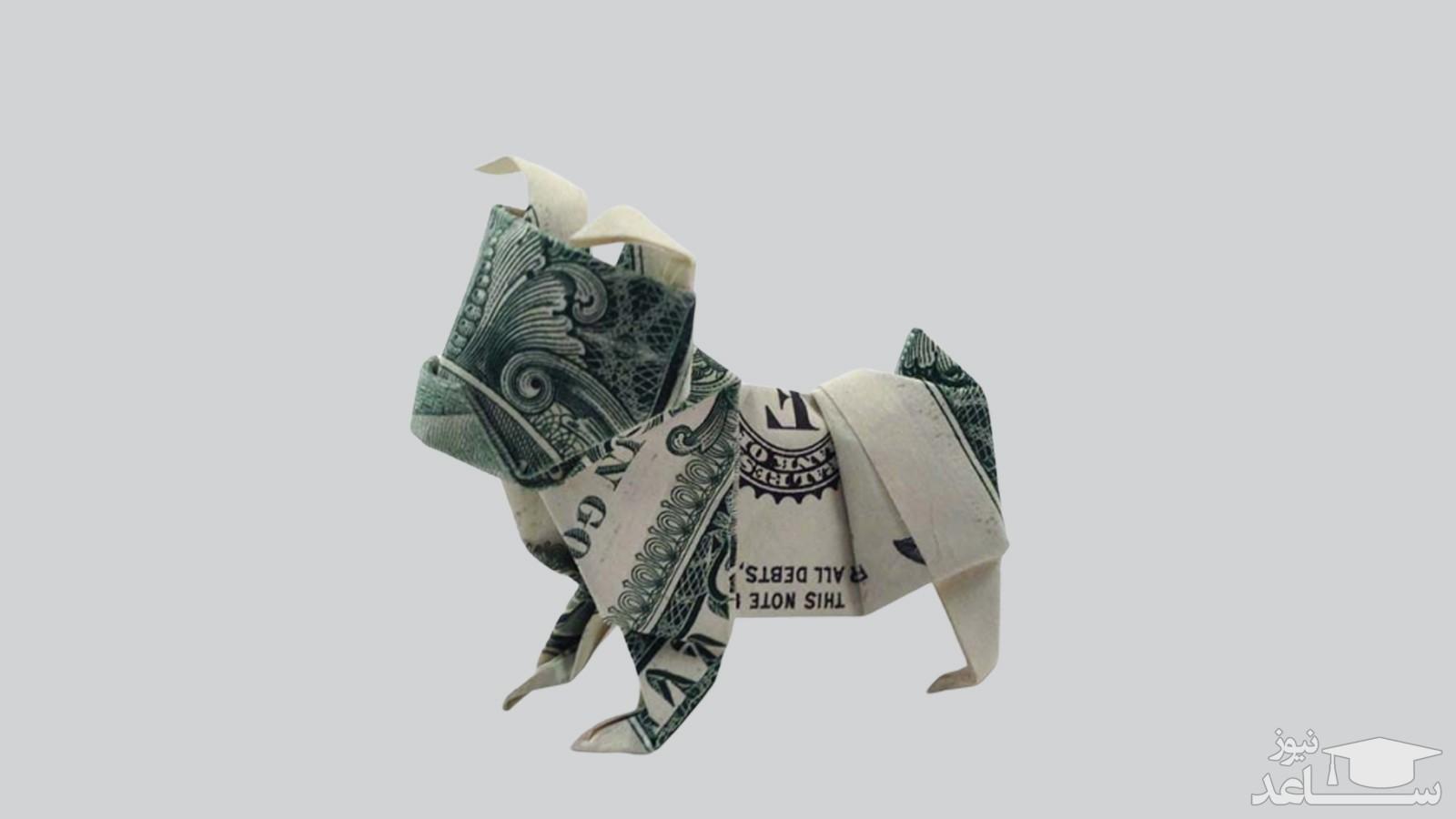 نگهداری حیوانات خانگی ( سگ ، گربه ، پرنده و...) چقدر هزینه دارد؟