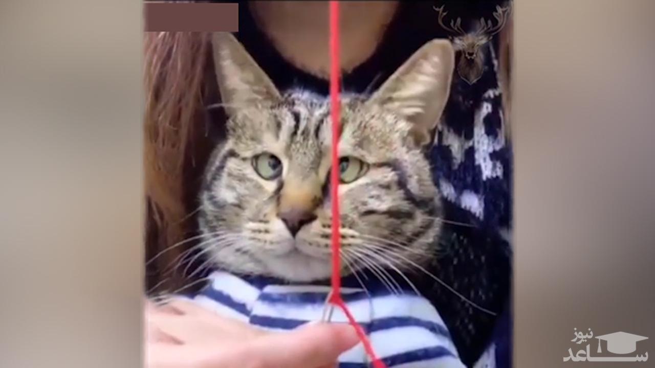 (فیلم) واکنش خنده دار گربه به نخ شدن سوزن