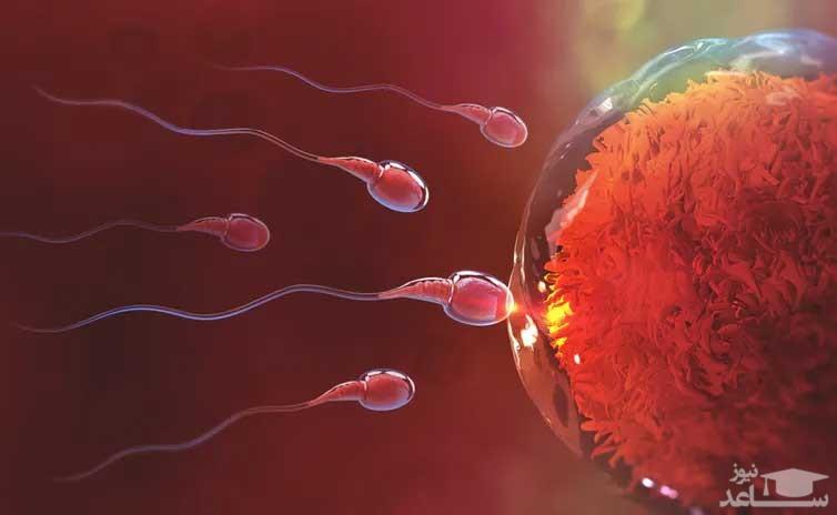 اسپرم خود را چگونه تقویت کنیم؟