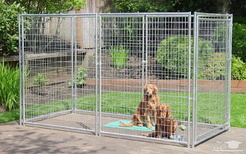 قفس سگ را چگونه تمیز کنیم؟