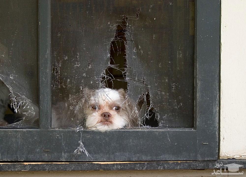 نشانه های اضطراب جدایی در سگ ها و روش های درمان