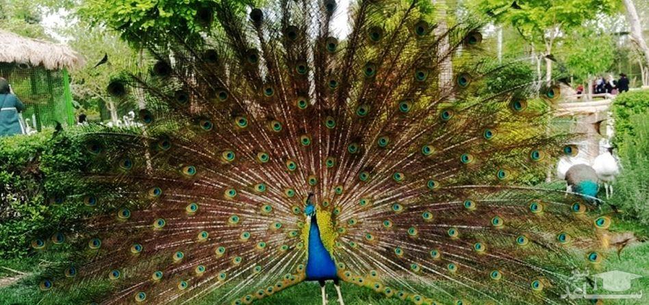باغ پرندگان اصفهان چه تفاوت هایی با باغ پرندگان تهران دارد؟