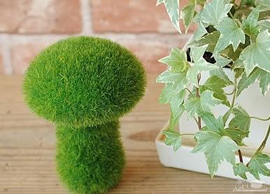 (فیلم) طرز تهیه سبزه عیدنوروز  روی کوزه و به شکل درخت سرو