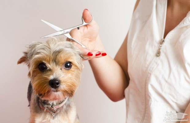 کوتاه کردن موهای سگ