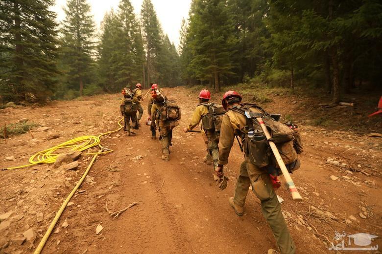 تلاش آتش نشانان برای فرونشاندن آتش سوزی جنگلی در ایالت کالیفرنیا آمریکا/ رویترز