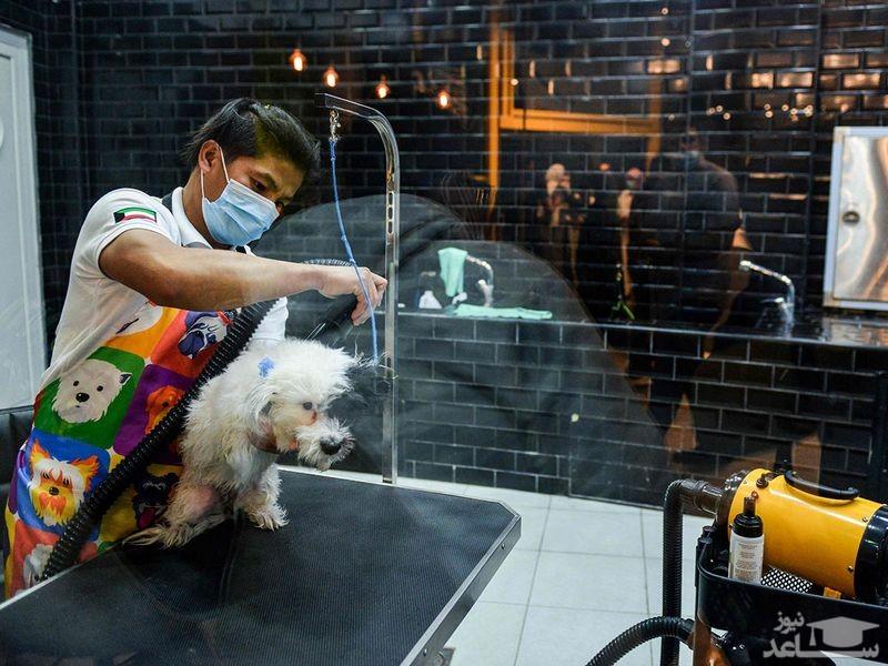 تصاویرِ افتتاح نخستین کافه سگ در عربستان!