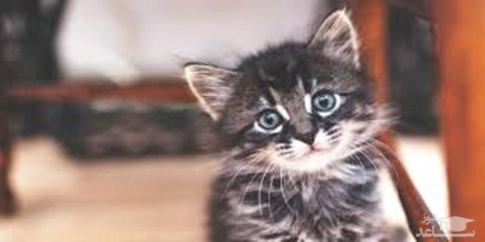 گربه حساسیت فصلی انسان را درمان میکند!