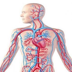 نمونه کارنامه و ظرفیت پذیرش رشته تکنولوژی گردش خون (پرفیوژن) در مقطع کارشناسی ارشد