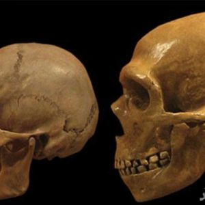 مغز انسانهای نئاندرتال چه فرقی با مغز انسان های امروزی دارد؟