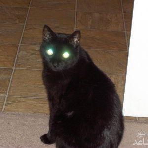 چرا چشمان گربه در شب می درخشد؟!