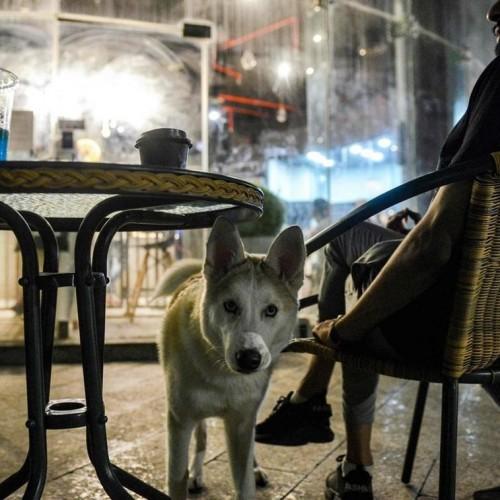 افتتاح یک کافه در عربستان برای سگ ها